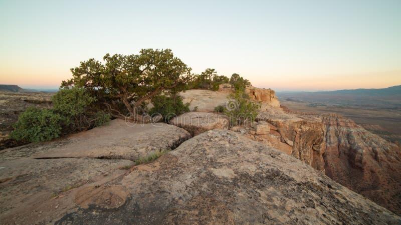 沙漠树和灌木从在地衣在鹅莓Mesa的西端的被盖的砂岩块的镇压增长  库存图片