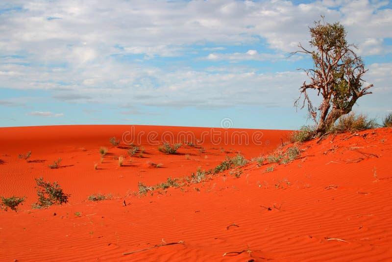 沙漠植被 库存图片