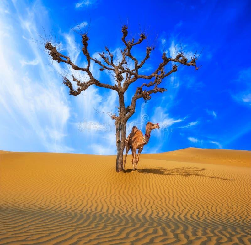 沙漠孤独的树和骆驼 免版税库存图片