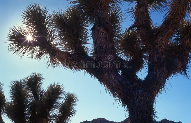 沙漠横向烧焦星期日 库存图片