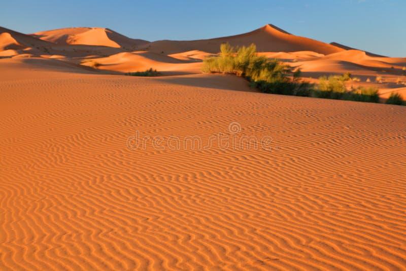 沙漠沙丘摩洛哥撒哈拉大沙漠沙子 库存图片