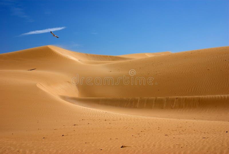 沙漠沙丘摩洛哥 图库摄影