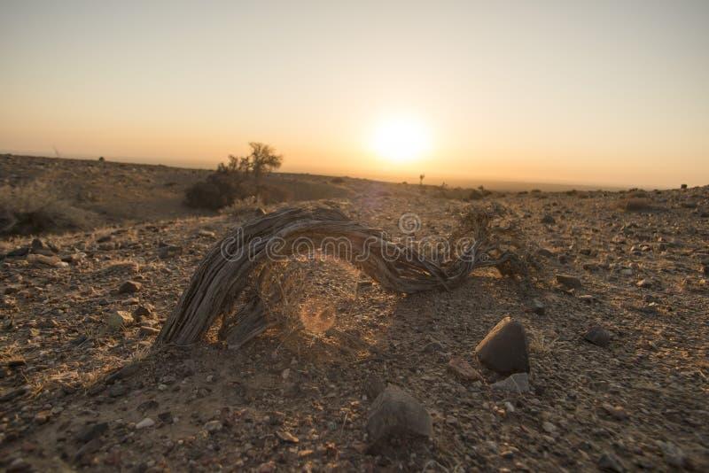 沙漠灌木  免版税库存照片