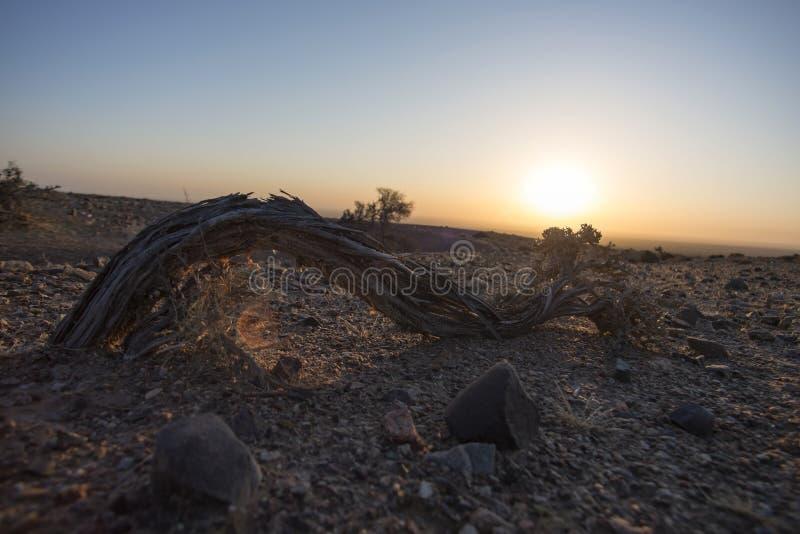 沙漠灌木  免版税图库摄影