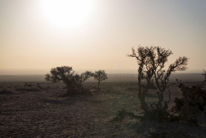 沙漠灌木  库存图片