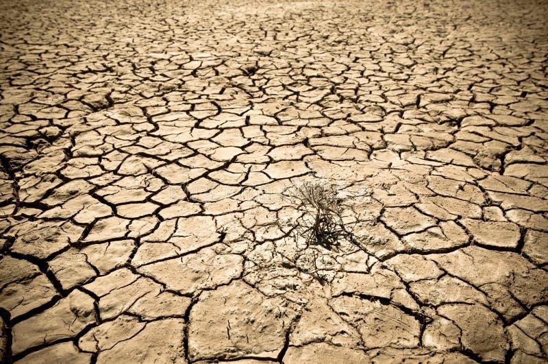沙漠破裂的土壤  图库摄影
