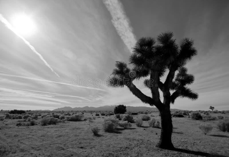 沙漠约书亚树 图库摄影