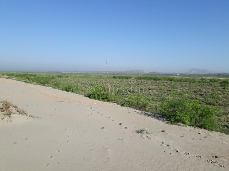 沙漠绿色末端 免版税库存照片