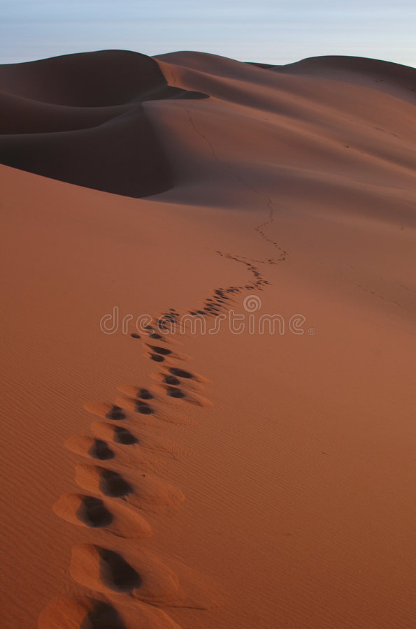 沙漠脚步撒哈拉大沙漠 库存图片