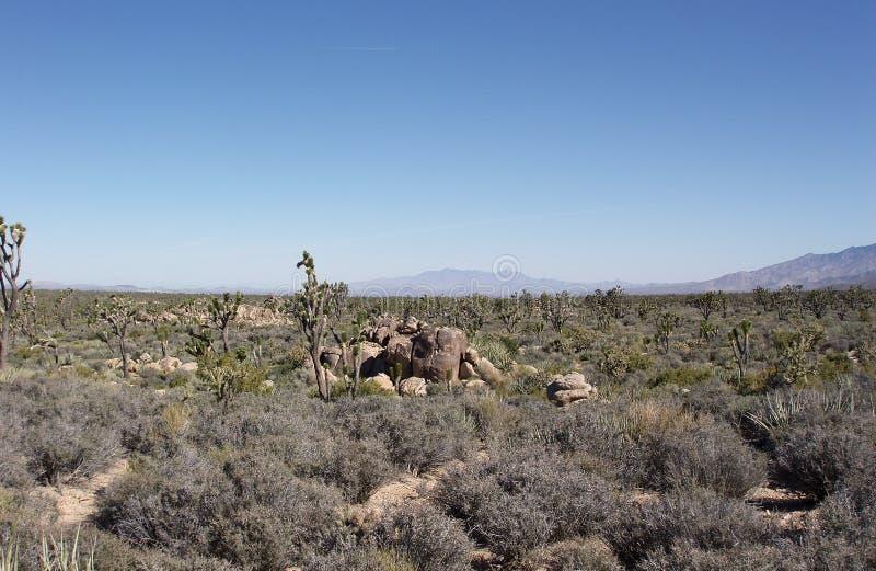 沙漠莫哈韦沙漠 免版税图库摄影