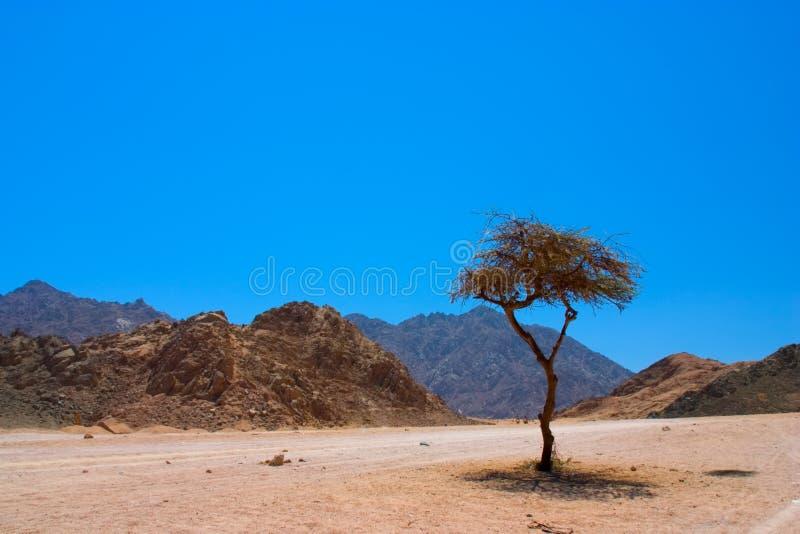 沙漠西奈视图 免版税库存图片