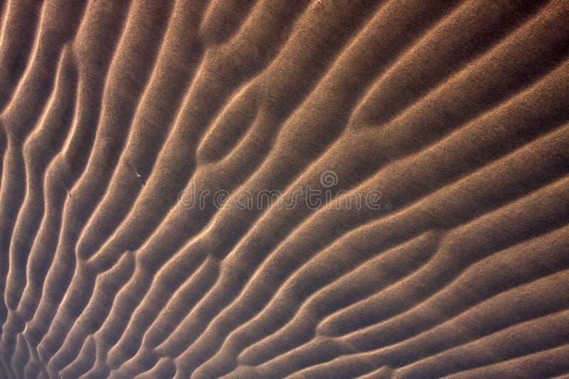 沙漠详细资料横向 免版税库存照片