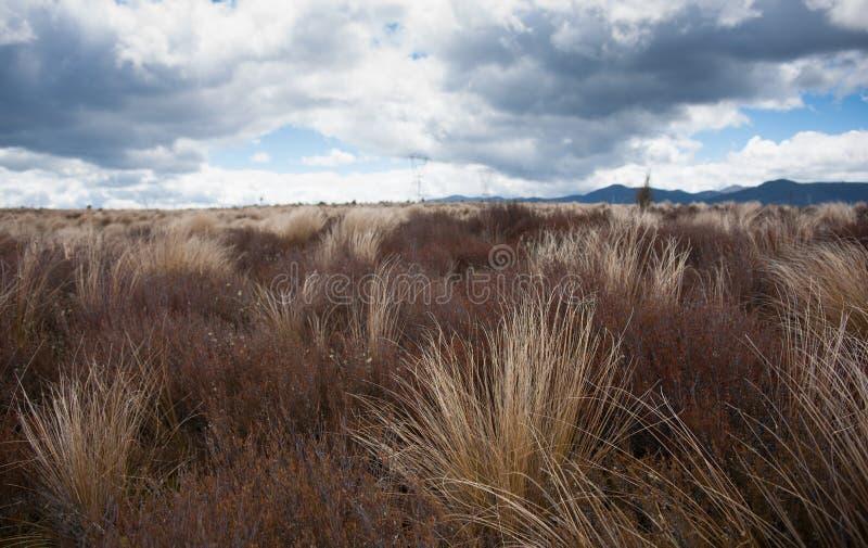 沙漠路丛 免版税库存照片