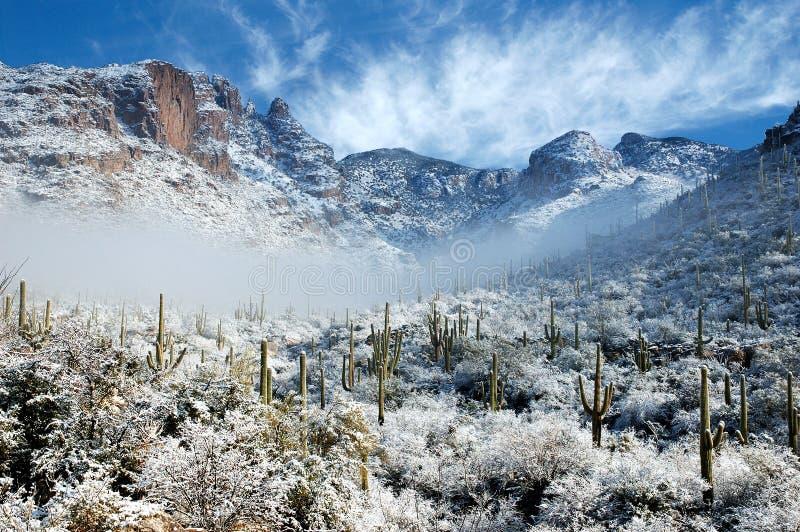 沙漠降雪 免版税库存照片
