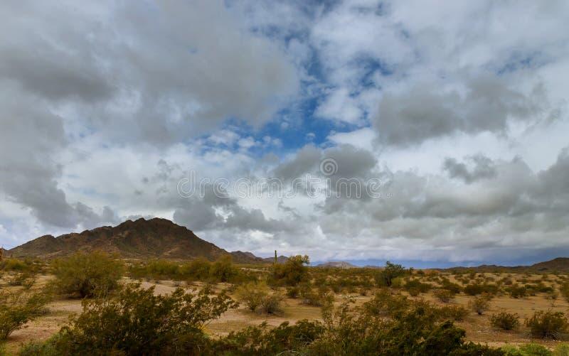 沙漠风景在山的菲尼斯,亚利桑那仙人掌 免版税图库摄影