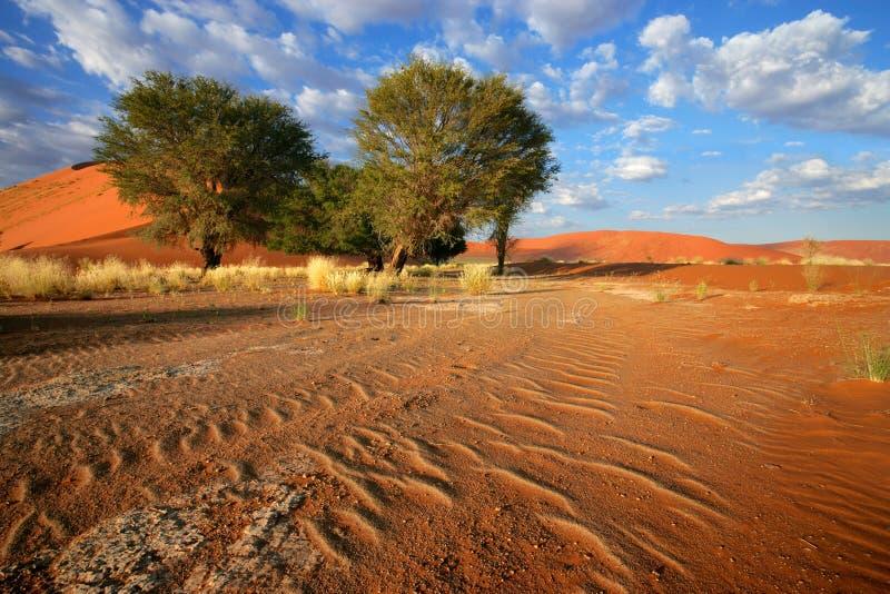 沙漠风景 免版税库存照片