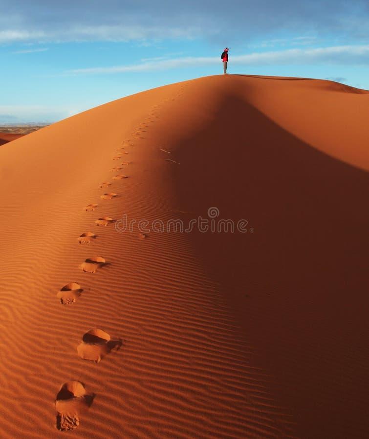 沙漠高涨 免版税图库摄影