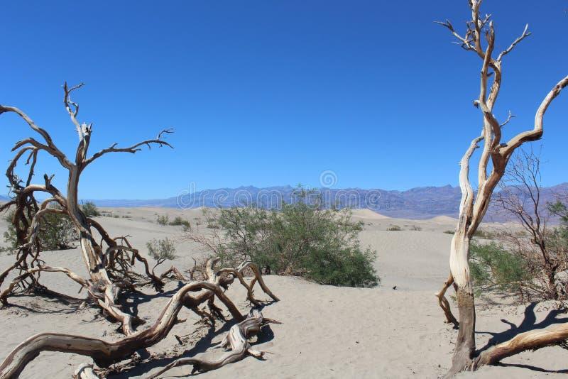 沙漠,亚利桑那 免版税库存照片