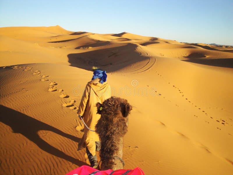 沙漠从骆驼观点 免版税库存照片