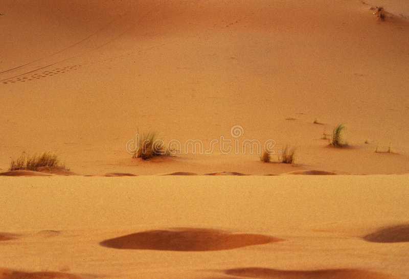 沙漠 免版税库存照片