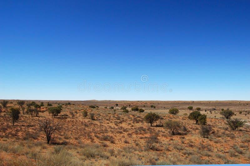 沙漠kalahari横向 免版税库存照片