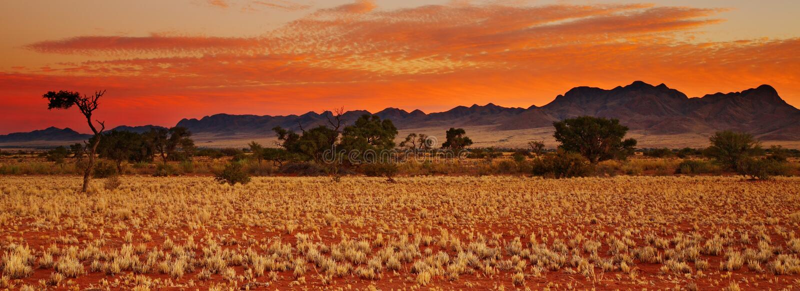 沙漠kalahari 库存照片