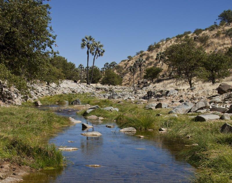 沙漠namib绿洲 免版税库存照片