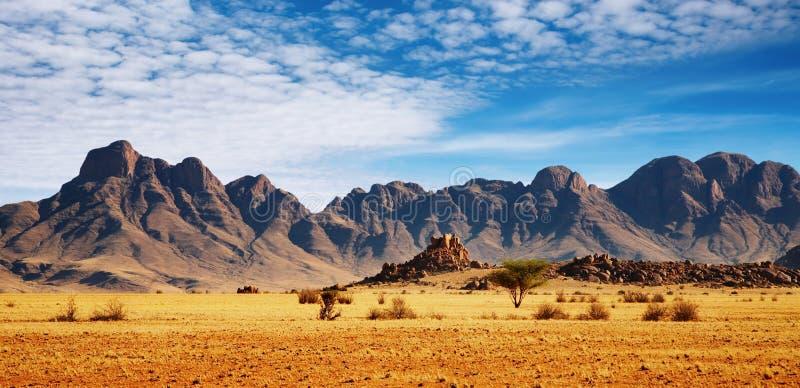 沙漠namib 图库摄影
