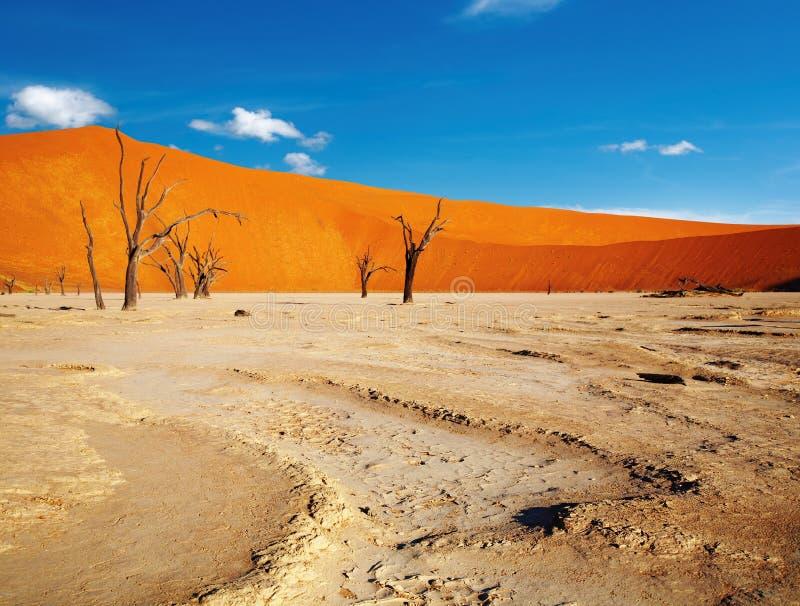 沙漠namib 免版税库存照片
