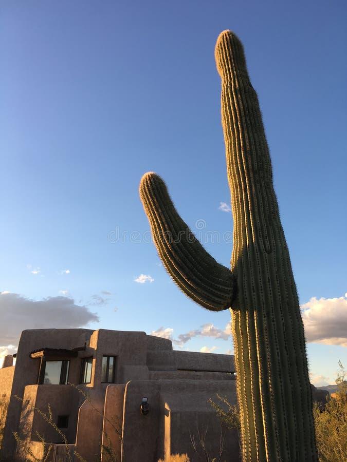沙漠xeriscape设计新的家庭山背景 库存照片