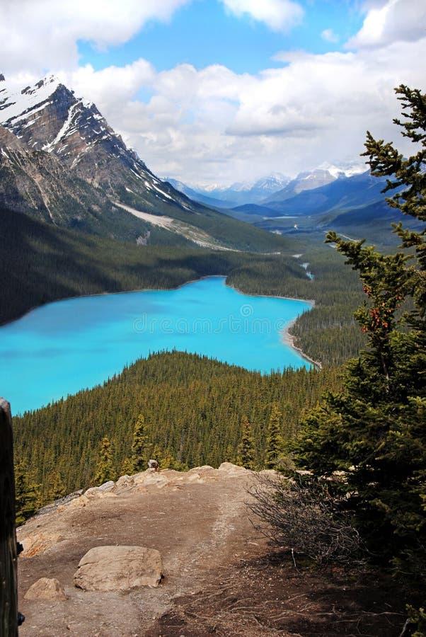 沛托湖在班夫国家公园,加拿大 库存图片