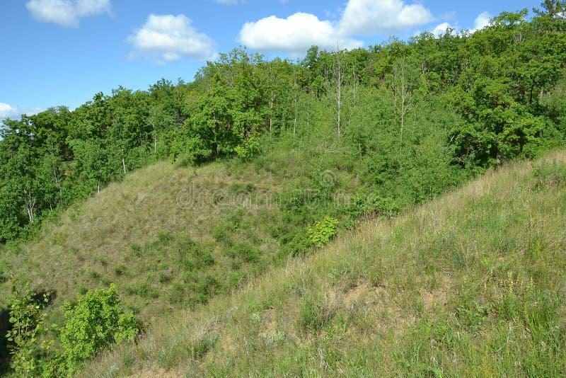 沟壑小山的倾斜的密集的春天森林 库存照片