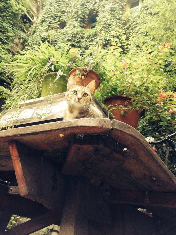 没有供以人员猫 免版税图库摄影