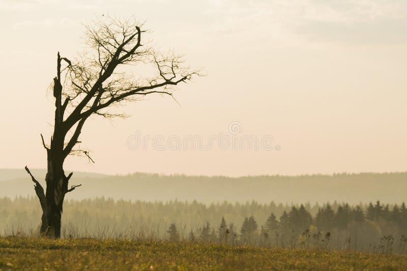 Download 没有叶子的偏僻的树 库存图片. 图片 包括有 早晨, 神奇, 启发, 及早, 黎明, 自治权, 阴霾, brander - 72353435