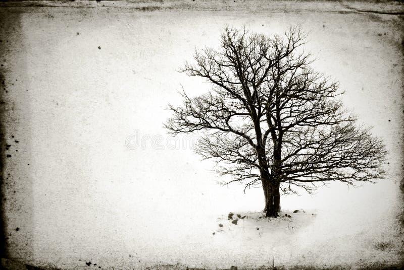 没有叶子的孤立结构树 免版税库存照片