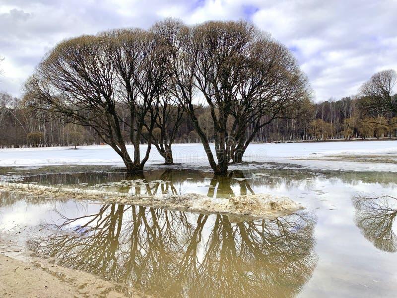 没有叶子的春天树,反映在水 库存图片