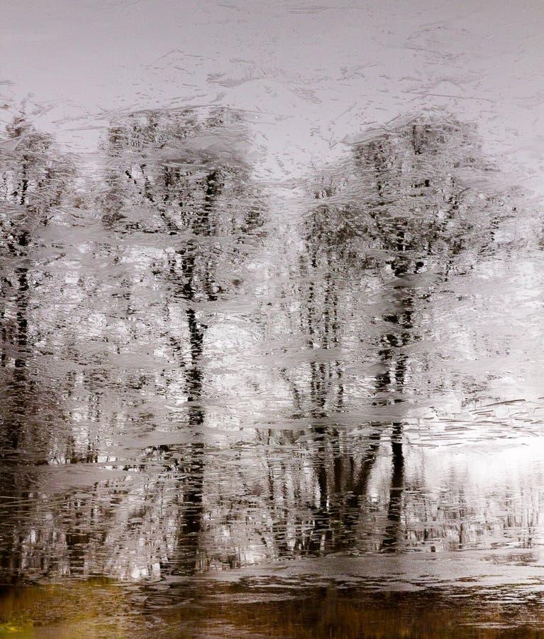 没有叶子的树t被反射用稀薄的冰盖的湖的水表面上 免版税库存照片