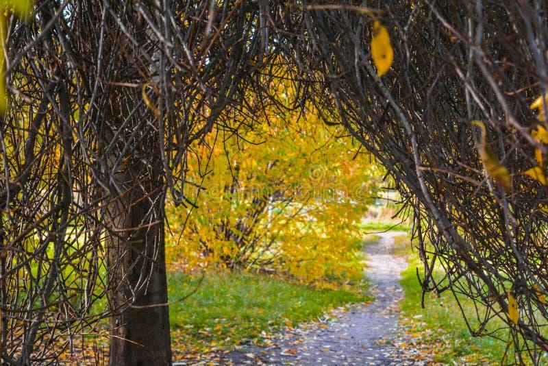 没有叶子的秋天分支在公园 免版税库存照片