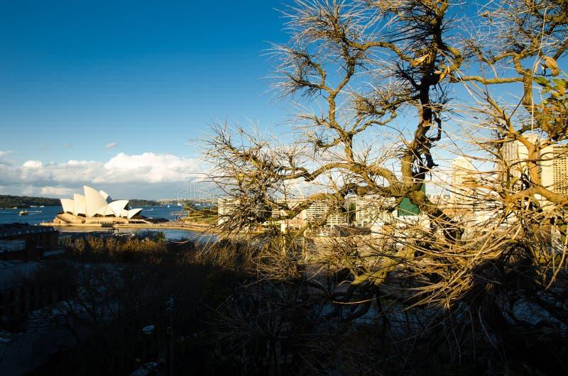 没有叶子的美丽的冬天树在日落点燃与悉尼歌剧院在背景 免版税图库摄影