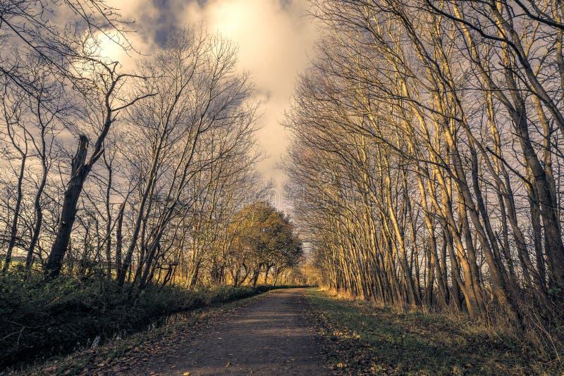 没有叶子的高大的树木由自然路 库存照片