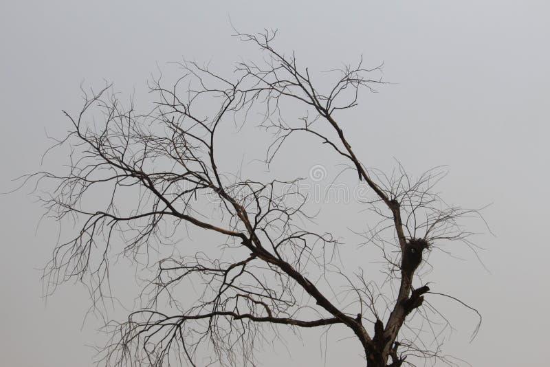没有叶子的结构树 图库摄影