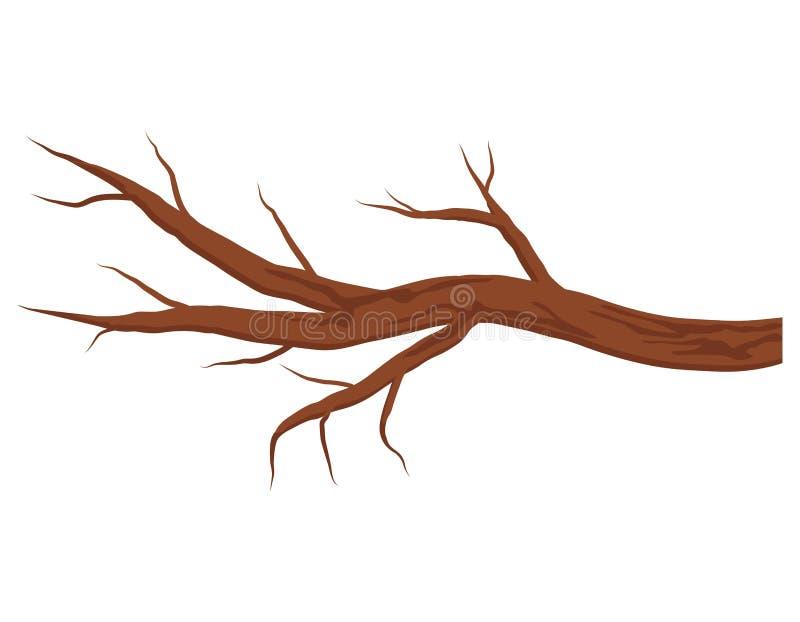 没有在白色背景隔绝的叶子的光秃的棕色树枝 秋天或冬天分支 向量例证