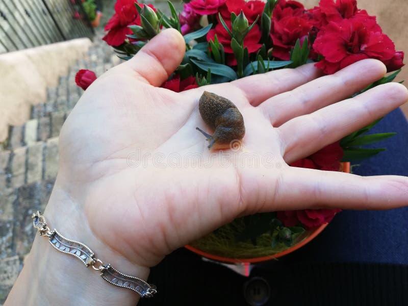 没有壳的蜗牛 免版税库存图片