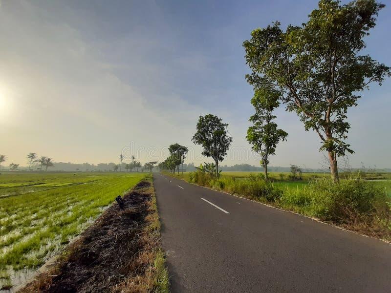 没有米领域的村庄和它的自然风景是奇怪和奇怪的看 库存照片