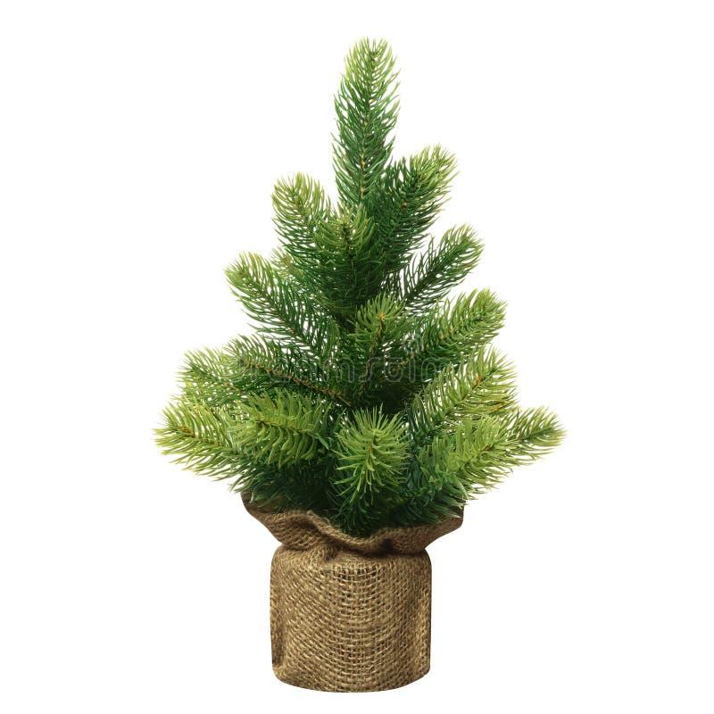 没有装饰的分蘖性小绿色圣诞树在白色背景被包裹隔绝的罐 库存照片