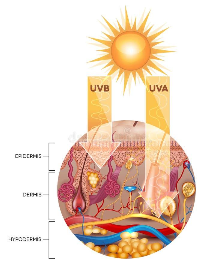 没有遮光剂化妆水的无保护的皮肤 向量例证