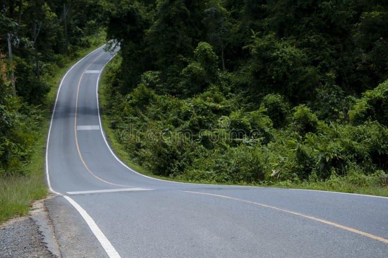 沥青森林公路s 库存照片