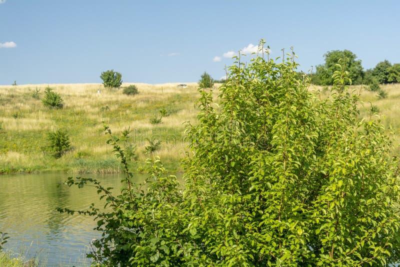 河、绿色树、小山和蓝色多云天空美丽的景色  r 免版税库存图片