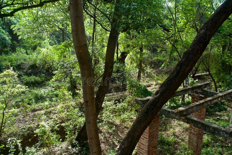 河、自然和废墟 免版税库存照片