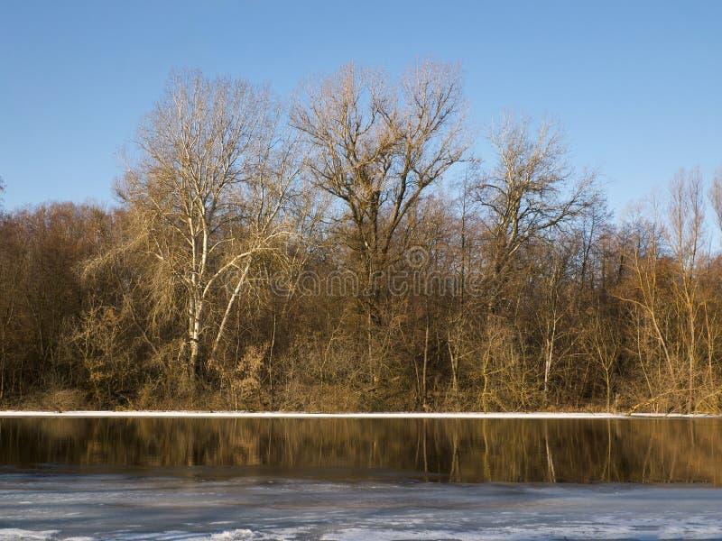 河和树在春天 图库摄影